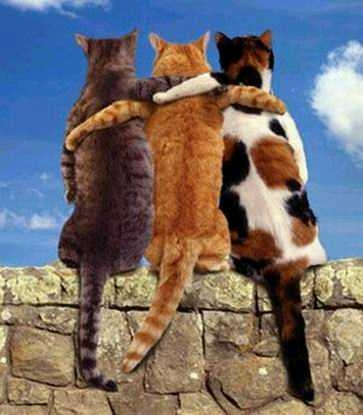 http://www.wisblog.net/clients/Cercle_economiste/images/photos/unionfaitlaforce.jpg